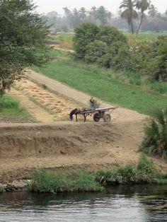 agricolture egypt