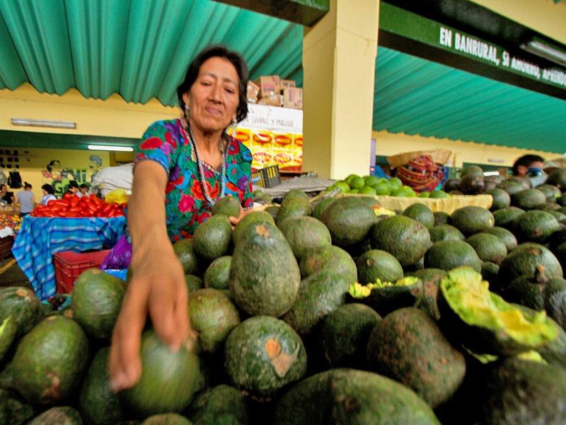Avocado in vendita in Guatemala: business e agricoltura nel paese centroamericano